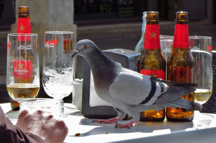 If ART had an animal equivalent - he would look like the pigeon that soils your car roof and cafe table